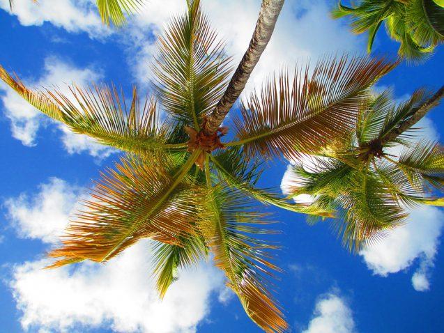 Caribbean Zomerfeest 22 juli!